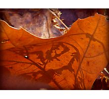Leaf Shadow Photographic Print
