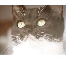 Honestly - black and white stray kitten Photographic Print