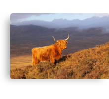 Highland Cattle Landscape Canvas Print