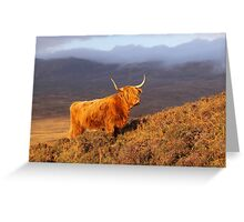 Highland Cattle Landscape Greeting Card