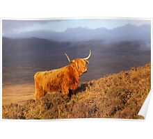 Highland Cattle Landscape Poster