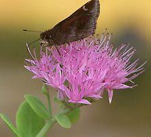 Skipper Butterfly by Penny Odom