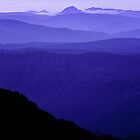 Tarkine Wilderness, Tasmania by Andy Townsend
