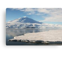 Lonely Penguin, Antarctica Metal Print