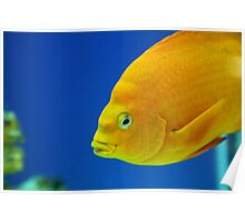 Aquarium Series Poster
