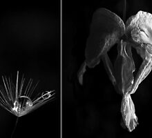 Diptych Collab 1 by eleveneleven
