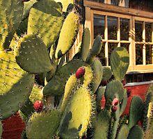 Cactus Berries by Renee D. Miranda