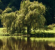 Willow Tree by Margaret Chilinski