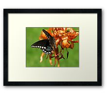 Dance Of Swallowtail and Tiger Lily Framed Print