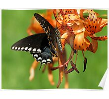 Dance Of Swallowtail and Tiger Lily Poster