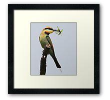 ''Rainbow Bee-eater'' Framed Print