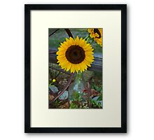 Summer Sun Flower Framed Print