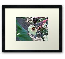 Red Okra in Bloom Framed Print