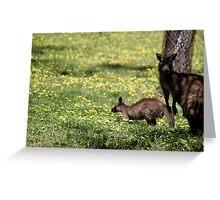 Kangaroos in the shade Greeting Card