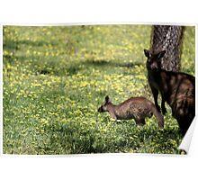 Kangaroos in the shade Poster