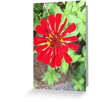 Vibrant Summer Zinia In Bloom Greeting Card