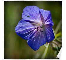 Purple Geranium Poster