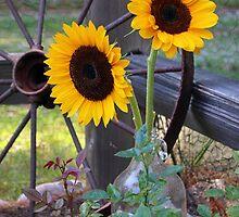 Sun Flowers ~ Yellow Flowers ~ Country Garden by roadsidestills