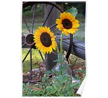 Sun Flowers ~ Yellow Flowers ~ Country Garden Poster