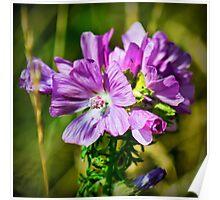 Pink Wild Flower Poster