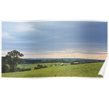 Sheep at Wistow - South Australia Poster