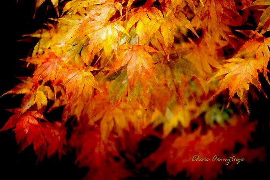 Shades of Autumn I by Chris Armytage™