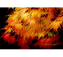 Shades of Autumn I Photographic Print