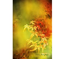 Shades of Autumn III Photographic Print
