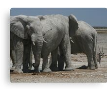 The Elephants and the Oryx Canvas Print