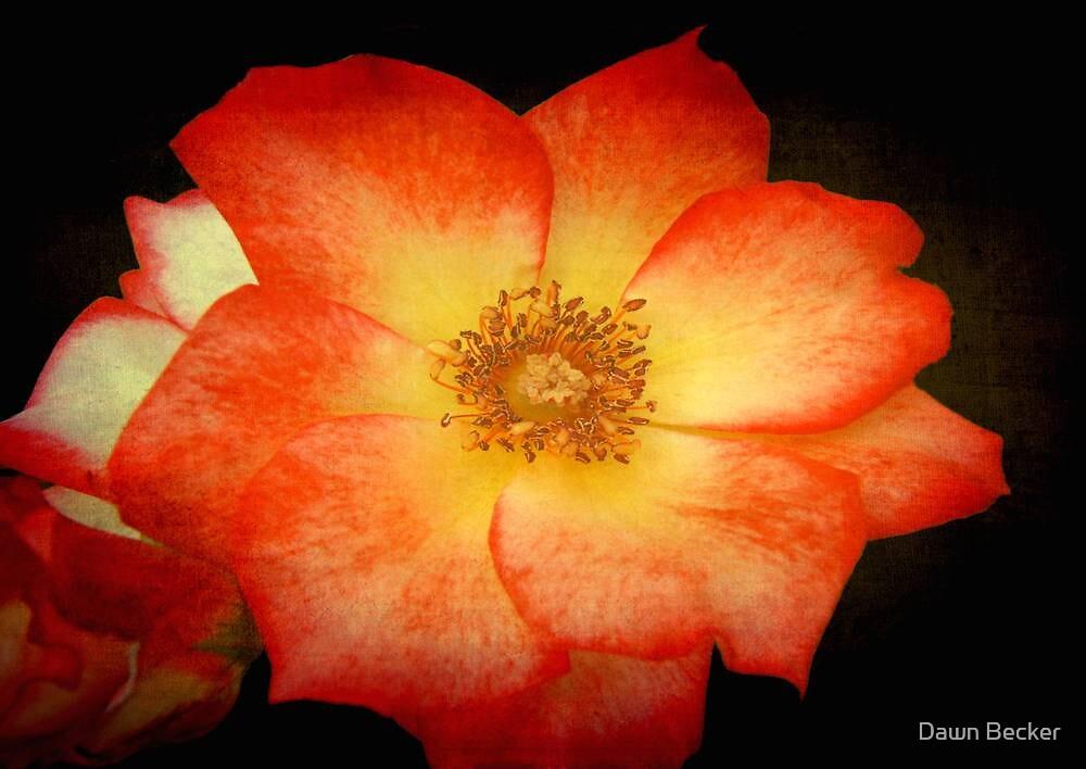 Orange Sorbet © by Dawn M. Becker