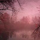 Misty morning light by Priska Wettstein