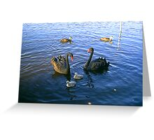 Black Swans With Cygnets Greeting Card