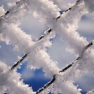 Snowy Fence by vbk70