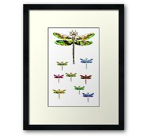 dragonfly squadron Framed Print
