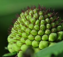 Natures Pin Cushion by MissyD