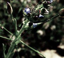 Purple Flower and Buds #1a - Nov 2010 by tmac