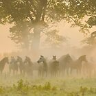 Arabian horses surrounded mist and light by Andy-Kim Möller