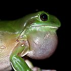 Green Tree Frog Calling by Normf