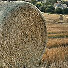 Harvest Time by MartinWilliams
