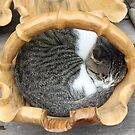 Sleeping peacefully by Susan Moss
