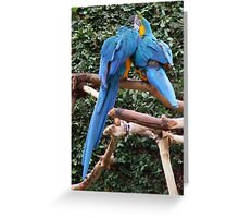 Do You want to Know  a Secret ??? Greeting Card