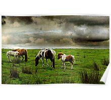 Dartmoor Ponies, Devon, UK Poster
