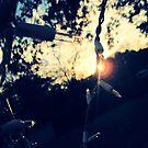 Good night sun  by Morgan Koch