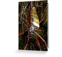 Orb spider - Madagascar Greeting Card