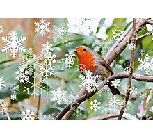 Season's Greetings! Photographic Print