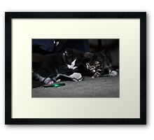 """ Kitten Christmas Wrap "" Framed Print"