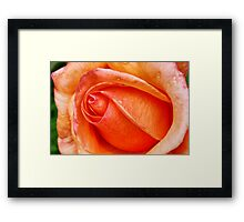 Rose HDR Framed Print