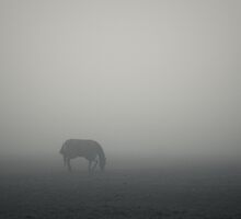 A Quietly Grazing Horse by photontrappist