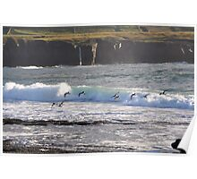 Oystercatchers surfing the waves Poster