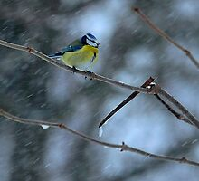 Braving the snow storm by Alan Mattison